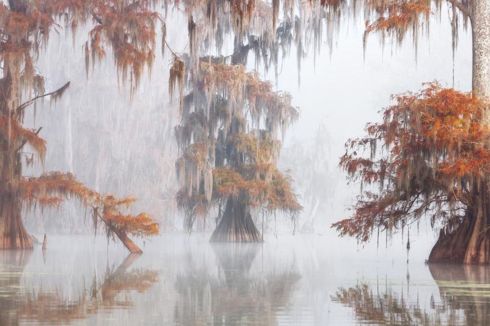 Луизианские водно-болотные угодья