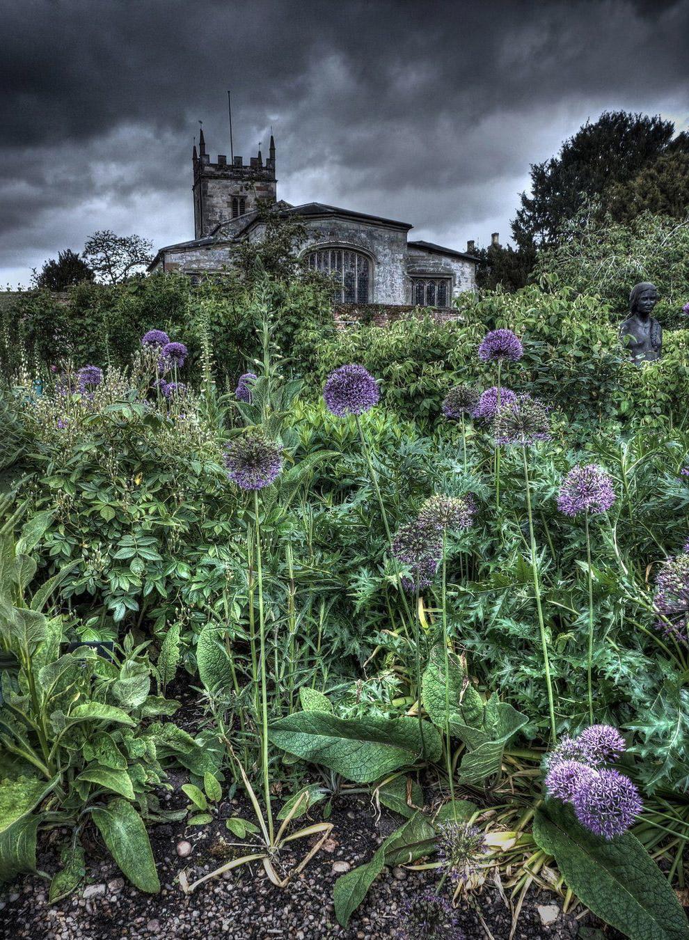 Растительность в Алчестере, Англия