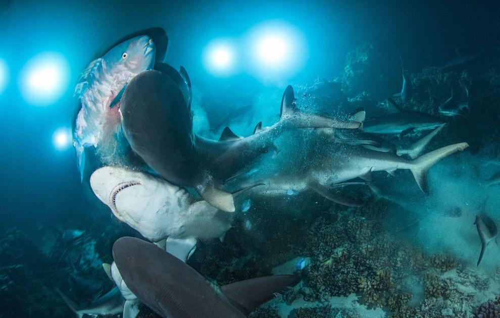 Охота акул