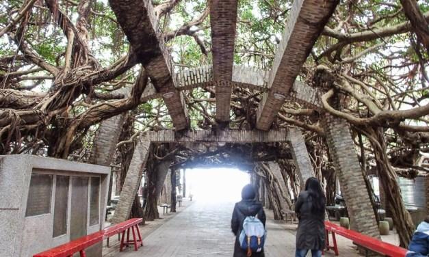 たった1本の巨樹ガジュマルに守られたお寺「通梁保安宮」