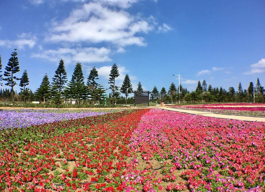天人湖遊憩區で、澎湖(ポンフー)随一のお花畑を見に行こう!