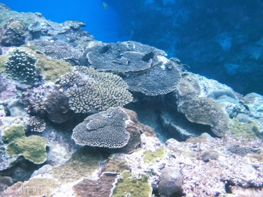 澎湖(ポンフー)には珊瑚礁がたくさん自生している