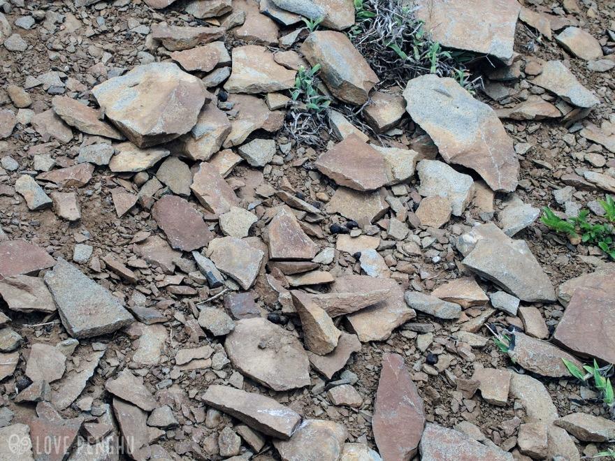 澎湖(ポンフー)の七美で発見された石器