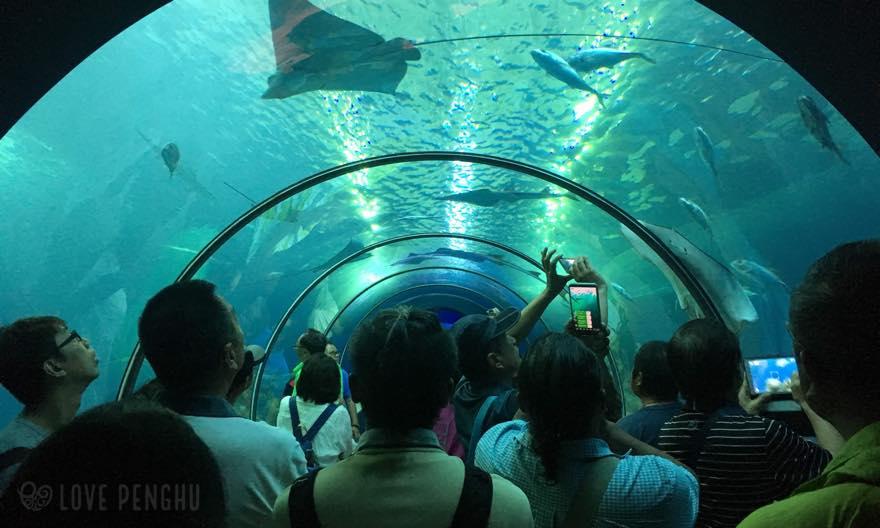 澎湖水族館のトンネル水槽