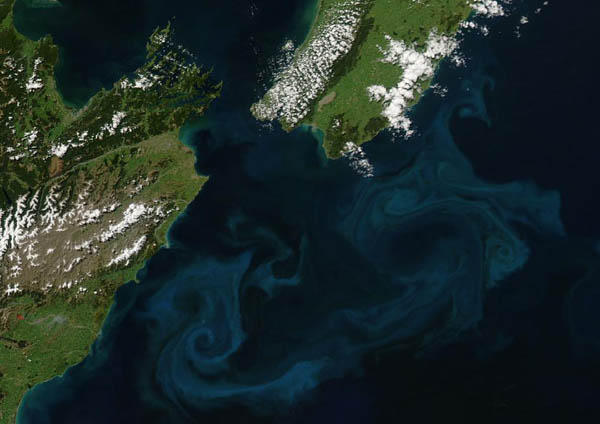 Phytoplankton spring bloom New Zealand Nasa Image of the Day