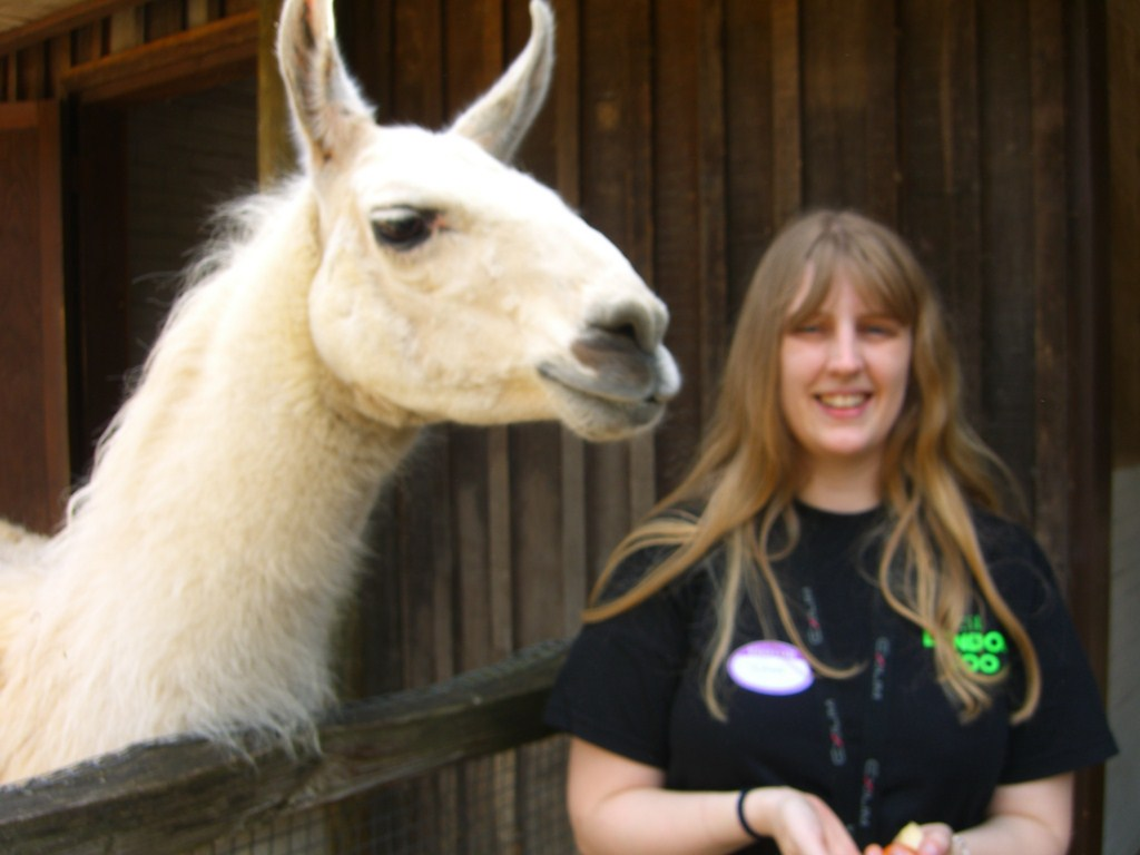 London Zoo - keeper for the day me and a llama