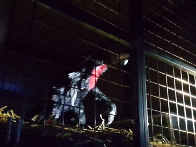 Dinos in the Wild dinosaur in cage
