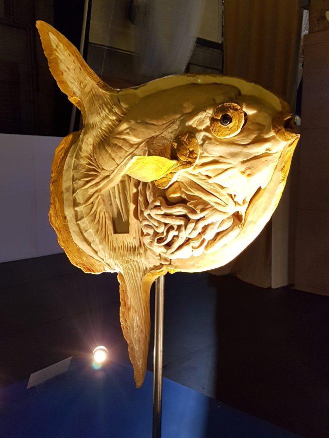 Sea Creatures fish
