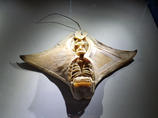 Sea Creatures Ray