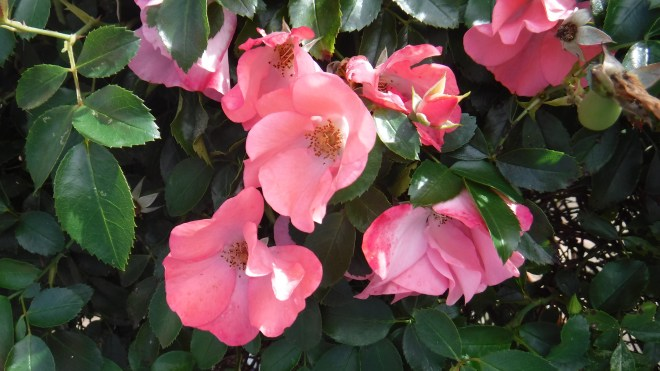 Fujifilm FinePix XP130 flowers