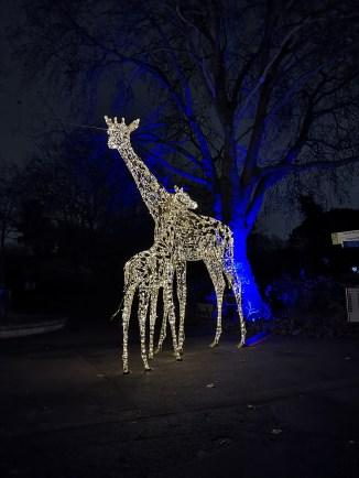 ZSL London Zoo giraffe