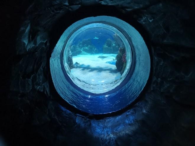 Sea Life shark window