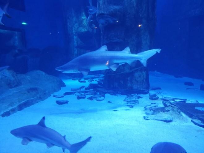 Sea Life sharks