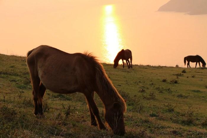都井岬夕日の野生馬