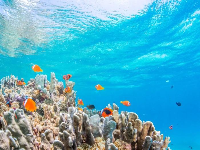 水族館 イメージ