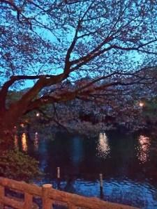 井の頭恩賜公園 夜桜