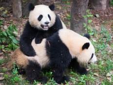 動物園デートのイメージ