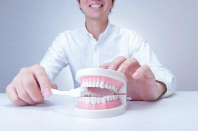 歯の模型と男性