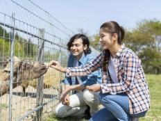 動物園デート ヤギに餌をあげる女性