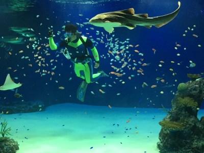 潜水ショー「ラグーンダイブ」