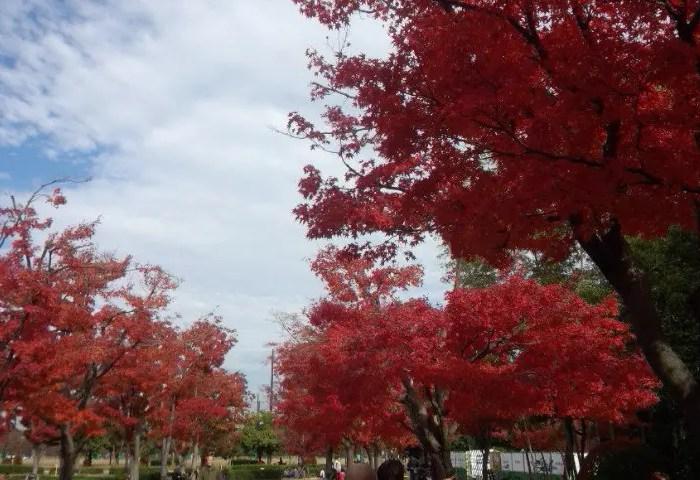 行船公園の美しい紅葉