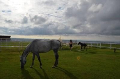 ワールド牧場の広大な芝と旨