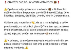 Медведи в Словении