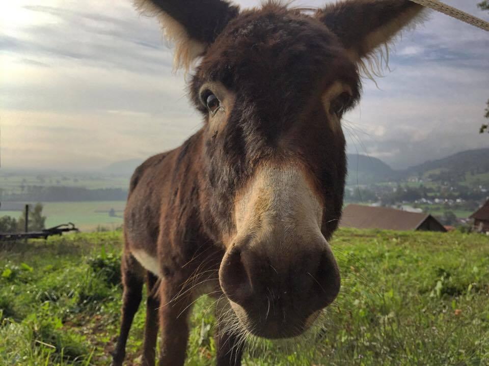 We maakten een wandeling op een voor ons onbekende plek. Een plek met ezels!!