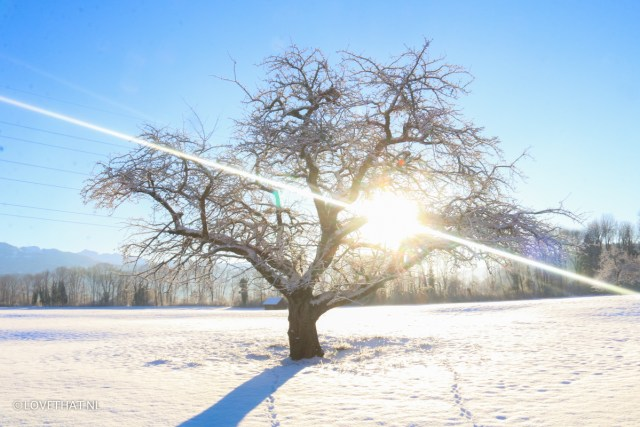 Winter in Zwitserland