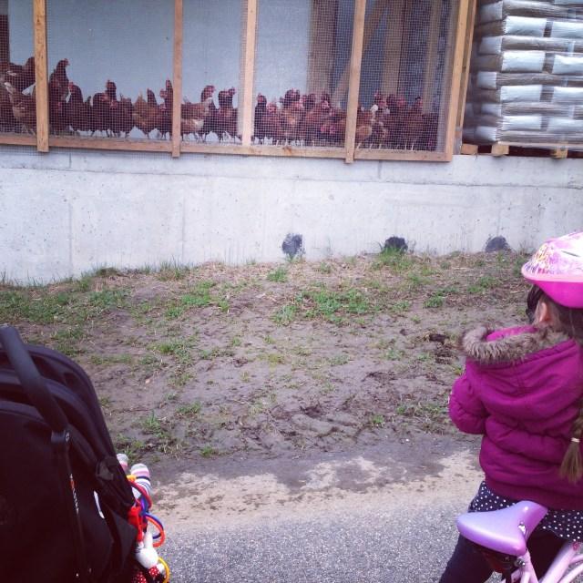 En de dames werden toegezongen door de kippen!