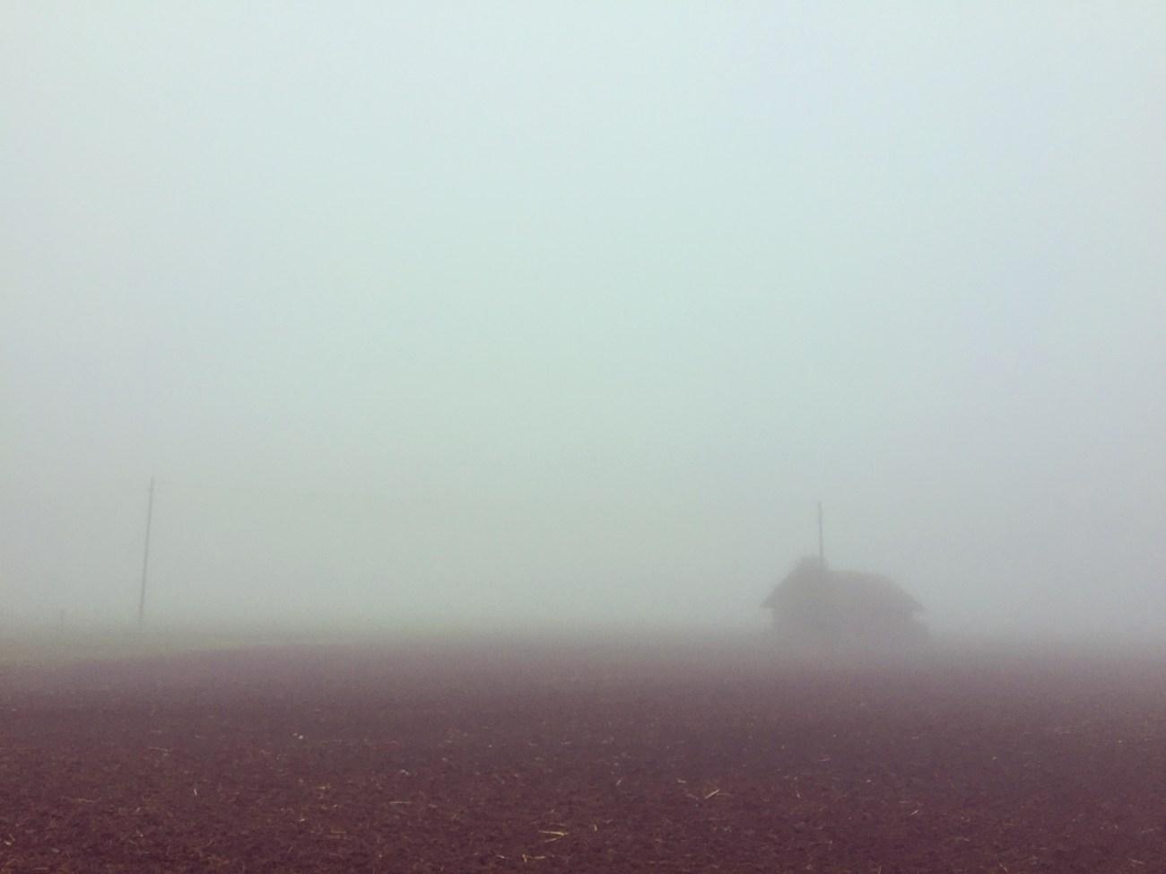 Maandag ging ik een uur wandelen door een mistig zwitserland!