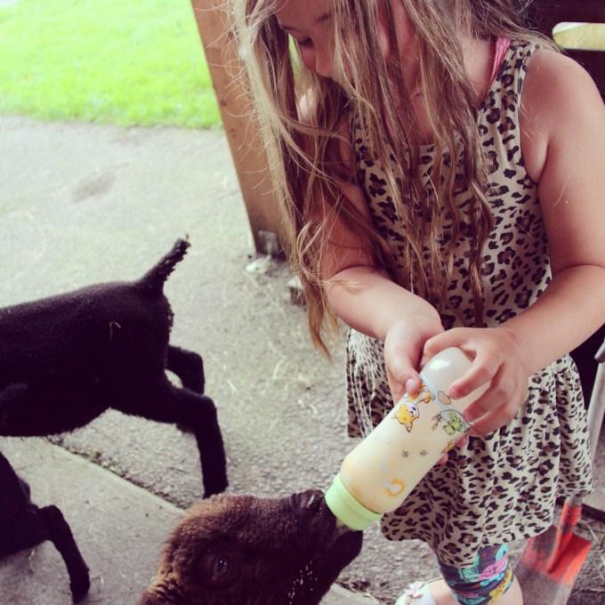 's Avonds mocht Eva die jonge schaapjes van vanochtend een flesje geven. Zo leuk!