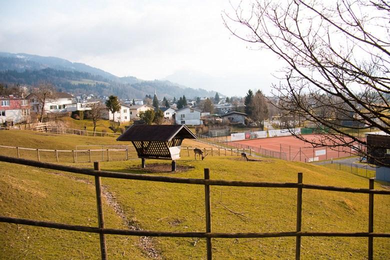 De Zoo is gelegen aan de voet van een berg. Er is één weg en daaraan zitten alle dieren. Je kijkt uit op het het dorp Wolfurt of op de fabriek van Doppelmayr. Bijzonder.