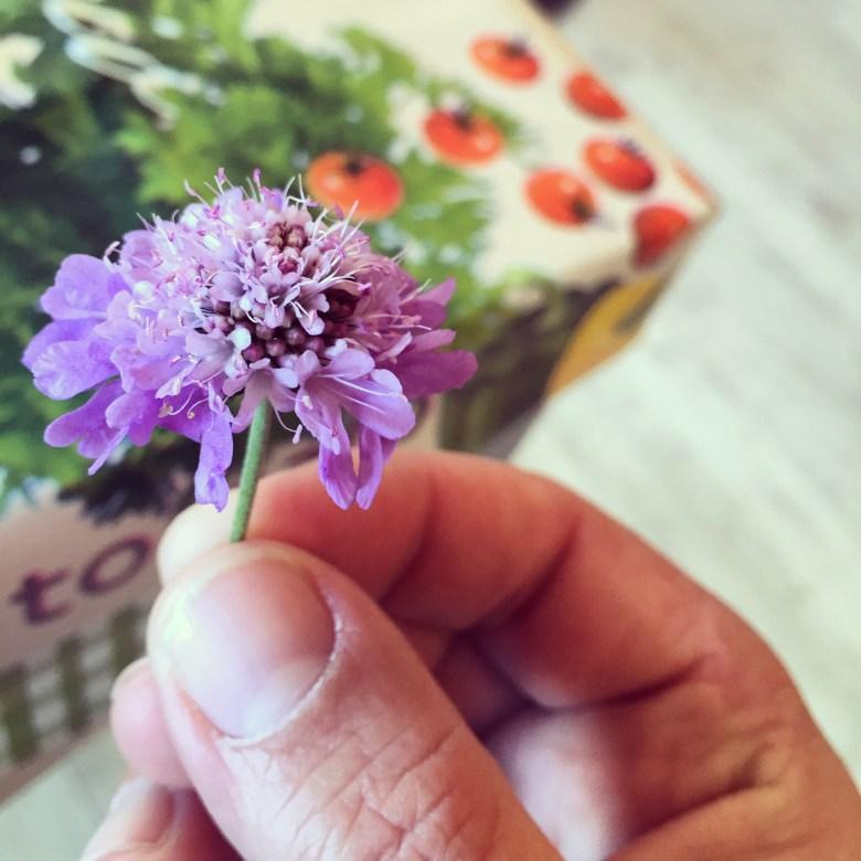 Van Eva's juf krijg ik een bloemetje