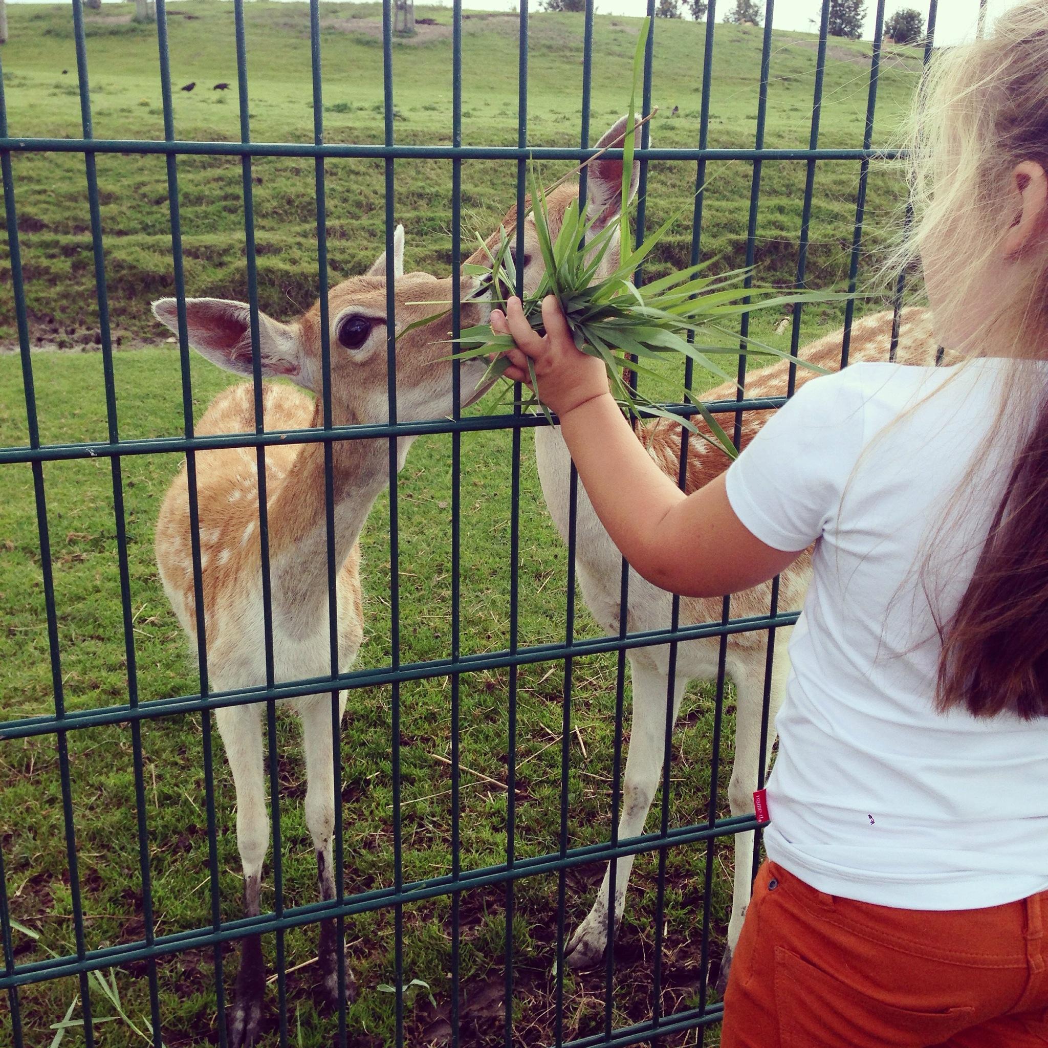 Floris heeft vakantie en daardoor zijn de ritmes wat anders. Liza was veel te vroeg uit bed gehaald en daarom liepen we maar naar de hertjes, even de tijd tussen het eten overbruggen.