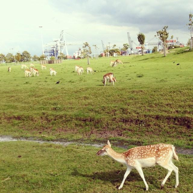 Ons groene dorp met de industrie erachter. Ik vind het contrast zo fijn.