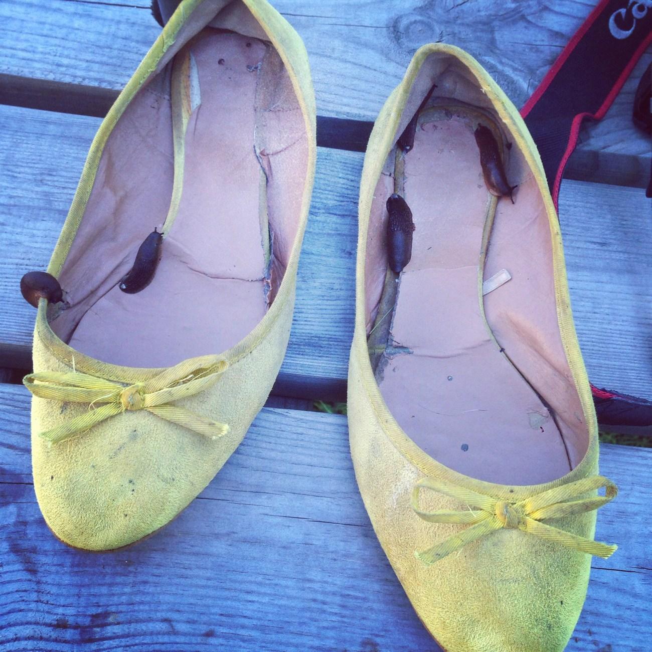 Bij het opruimen vind ik zoveel naaktslakken in mijn schoenen. Jakkes!