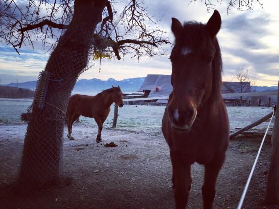We lopen nog langs de paarden. Liza ook weer gelukkig!