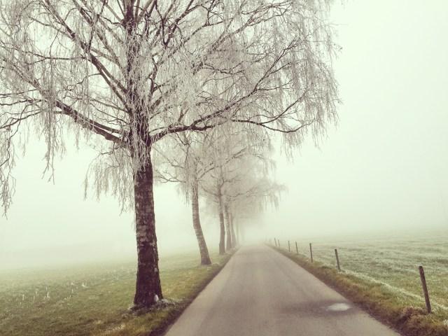 Op maandag word k betoverd door de schitterende rijp op de bomen.