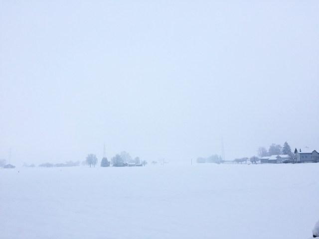 Toen we eenmaal boodschappen hadden gedaan, maakten we het rondje af en liepen richting polder. Wat was het wit!!!