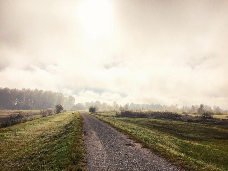 Mijn zondagochtend begon met een fotoshoot en de nevel boven het riet.