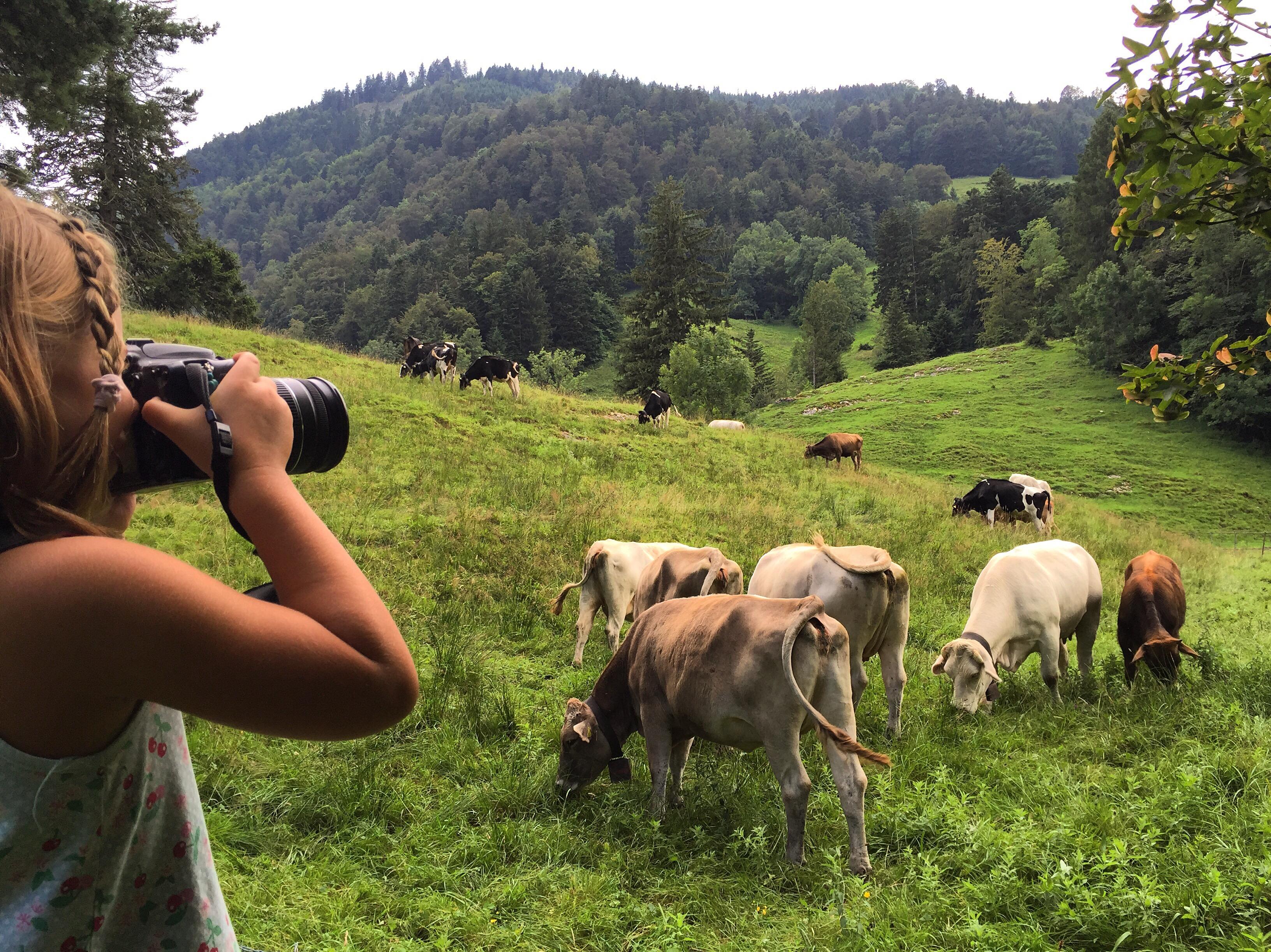 Die middag grilden we weer ergens op de berg en maakte Eva nog foto's van de koeien.