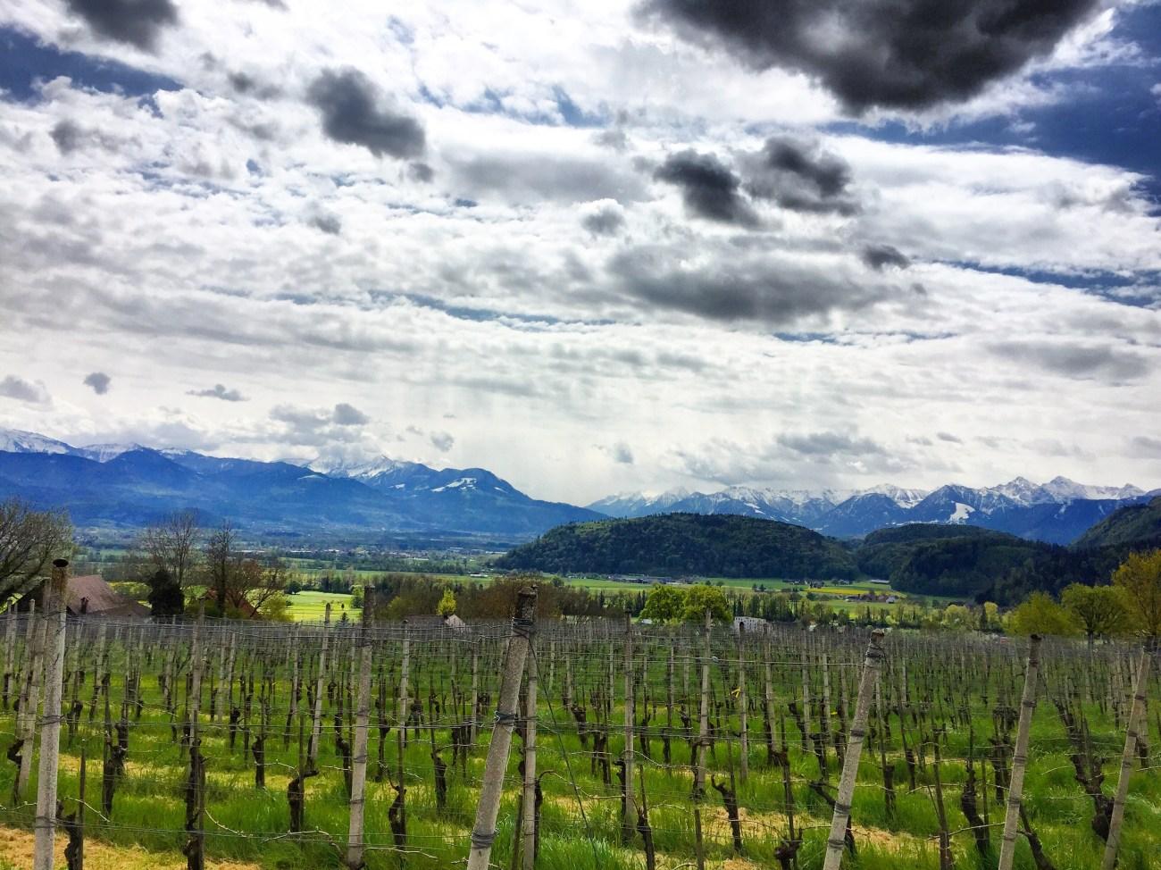 En bij de wijnvelden