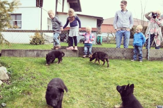 We komen de buuf tegen en ze laat ons even knuffelen met de puppies. Kinderen vinden het spannend en tof!
