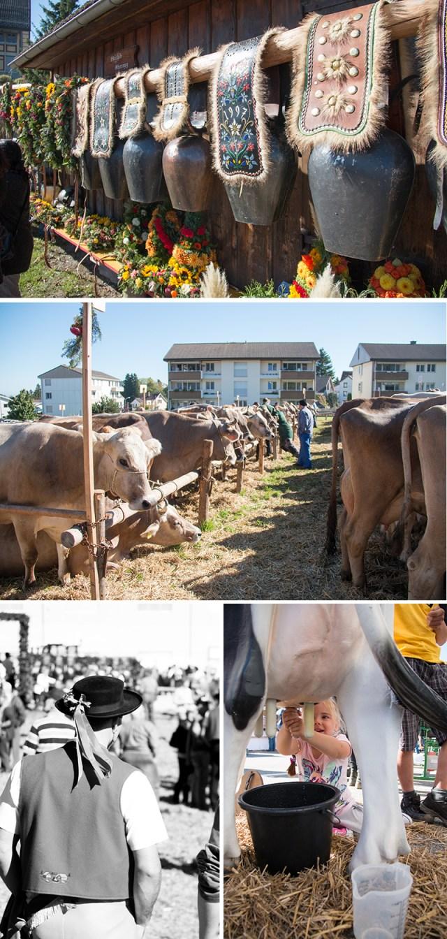 Zaterdagochtend gingen we koeien kijken in Oberegg. Tijdens de zogenaamde Alpabzug waren de koeien schitterend bekleed met grote bellen en bloemen.