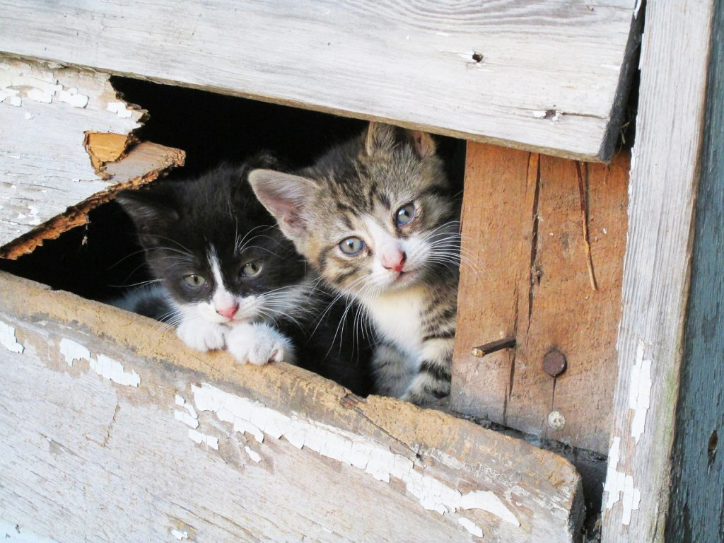 Two kittens peeking out from within a wooden structure