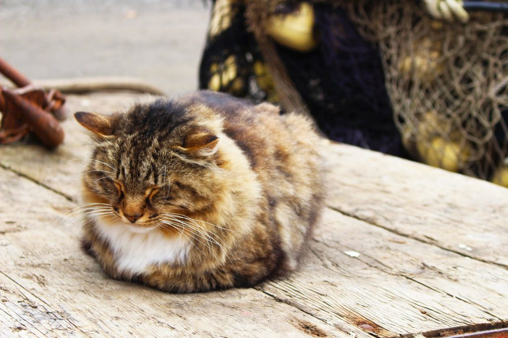 A fluffy brown white and orange cat snoozing on an outdoor wooden surface