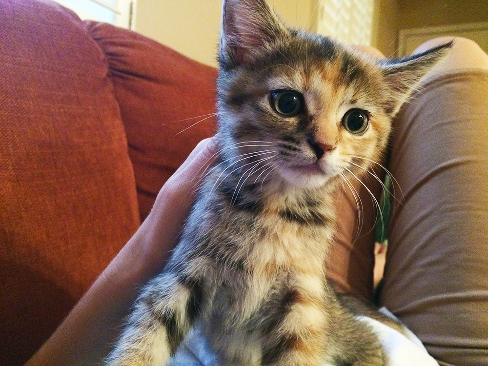 A torbie kitten looks wide-eyed to the right of the camera.