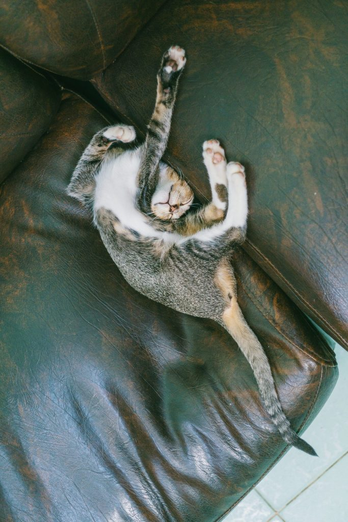 A cat lying on its back twisted into a stretch on a worn leather sofa.
