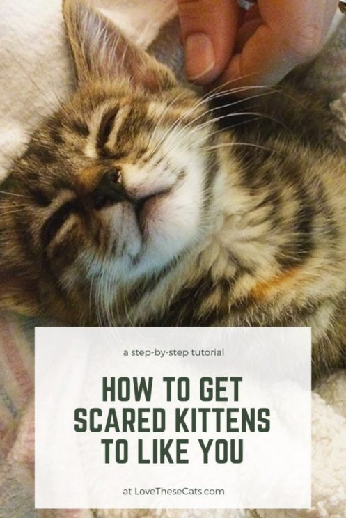 How to get scared kittens to like you